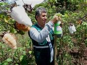 Estos sistemas implementados por las organizaciones nacionales de protección fitosanitaria buscan garantizan el estatus en los países que integran la CAN.