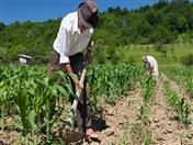 Secretaría General de la Comunidad Andina y el IICA unen esfuerzos para fortalecer desarrollo agropecuario en la región